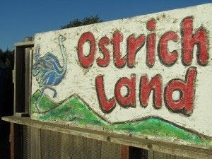 01 - Ostrichland, Buellton CA - Road Sweet Road